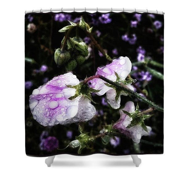 Shower Curtain featuring the photograph Rain Kissed Petals. This Flower Art by Mr Photojimsf