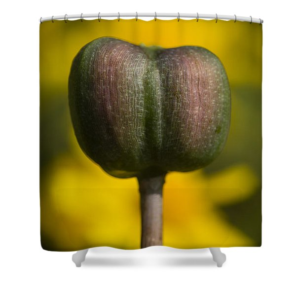 Rain-lily Capsule And Four-nerve Daisies Shower Curtain