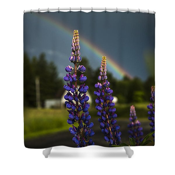 Rainbow Over Lupine  Shower Curtain