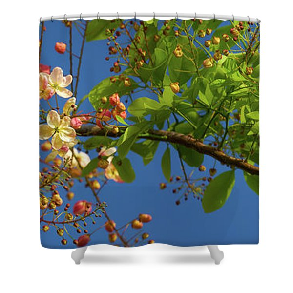 Rainbow Shower Tree Shower Curtain