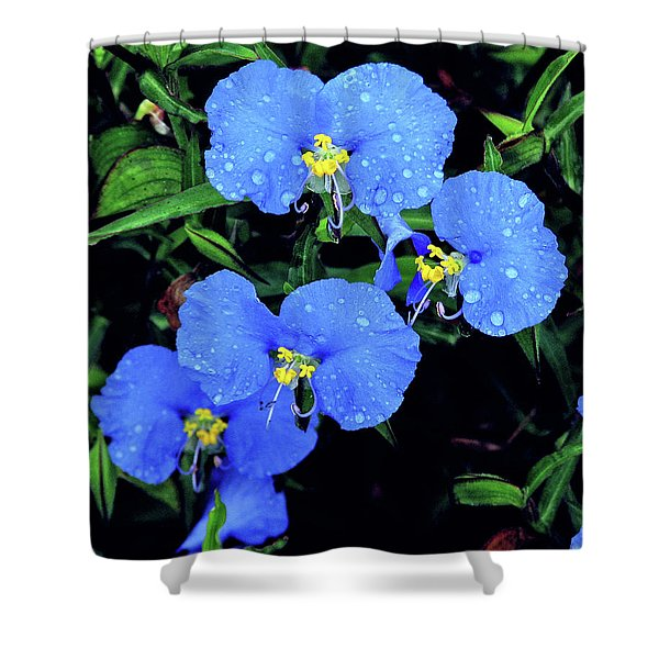 Raindrops In Blue Shower Curtain