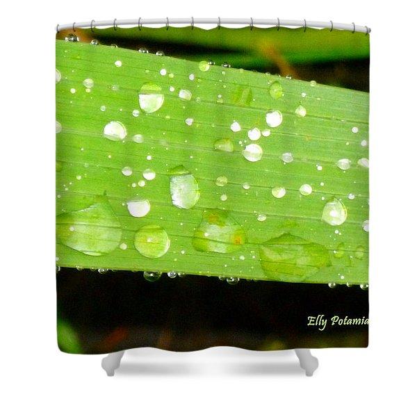Raindrops On Leaf Shower Curtain
