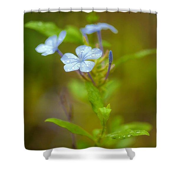 Raindrops On Petals Shower Curtain