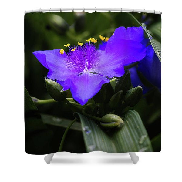 Raindrops On Spiderwort Flowers Shower Curtain