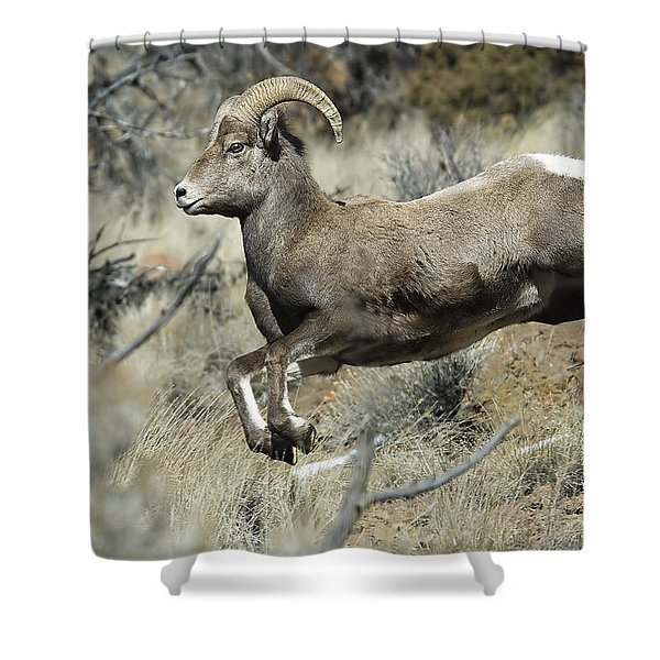 Ram In A Hurry Shower Curtain