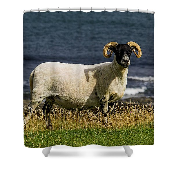 Ram With Attitude Shower Curtain