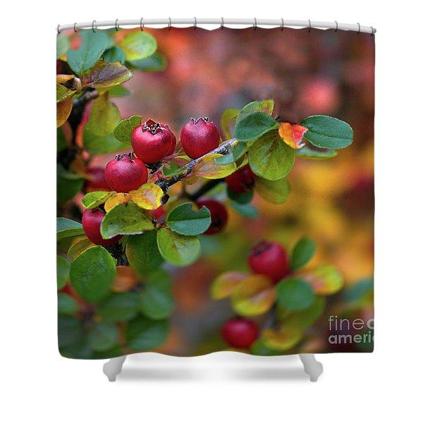 Ramona's Berries Shower Curtain