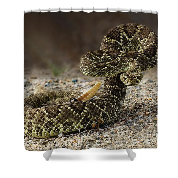 Mohave Green Rattlesnake Striking Position 2 Shower Curtain