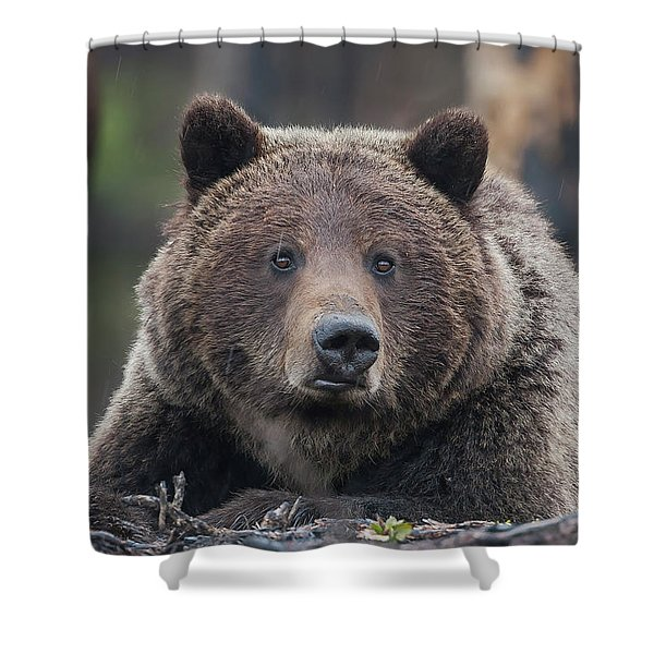 Raw, Rugged And Wild- Grizzly Shower Curtain