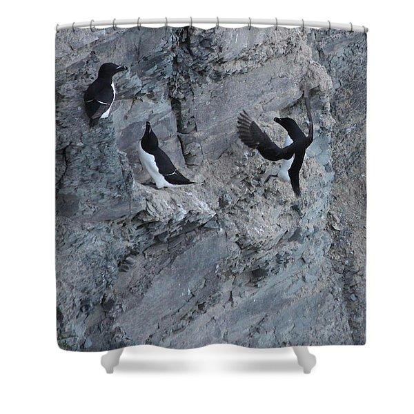 Razorbill Landing Shower Curtain