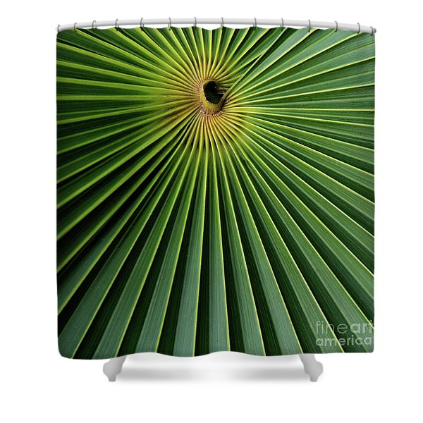 Razzled Rays Mexican Art By Kaylyn Franks Shower Curtain