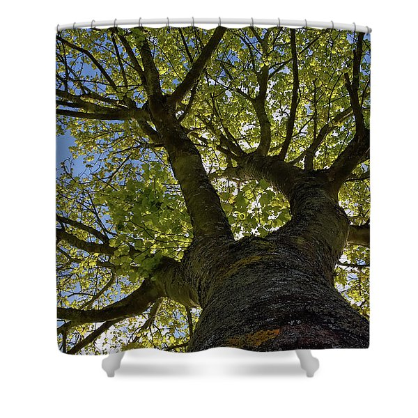 Reach For The Sky Shower Curtain