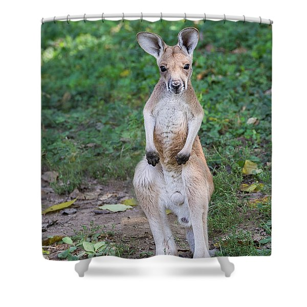 Shower Curtain featuring the photograph Ready To Rumble by Andrea Silies