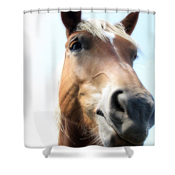 Really Shower Curtain