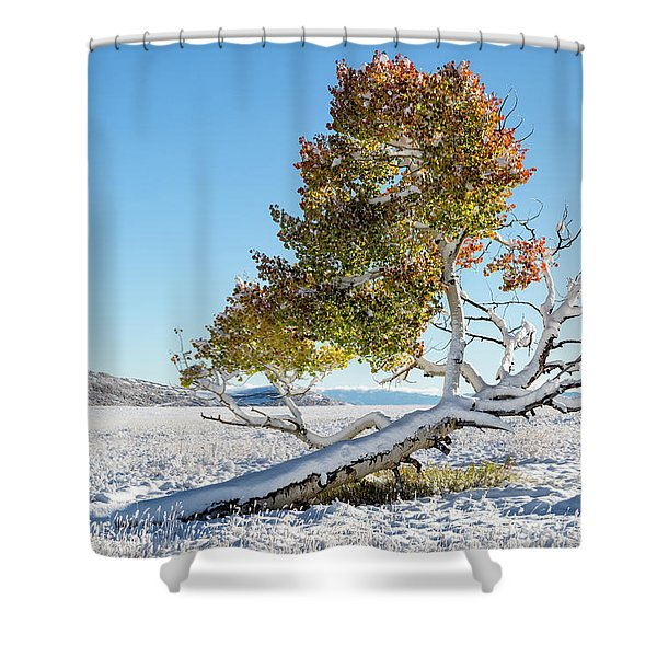 Reclining Tree With Snow Shower Curtain