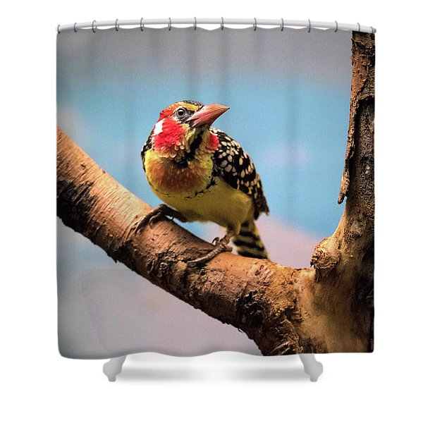Red And Yellow Barbet Shower Curtain