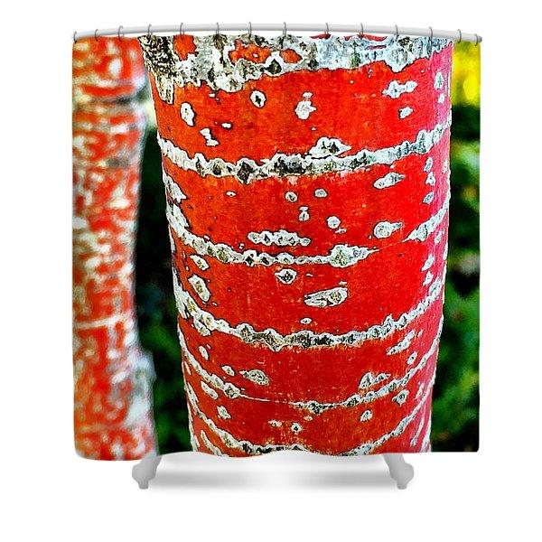 Red Bark Birch Shower Curtain