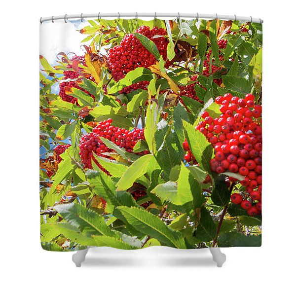 Red Berries, Blue Skies Shower Curtain