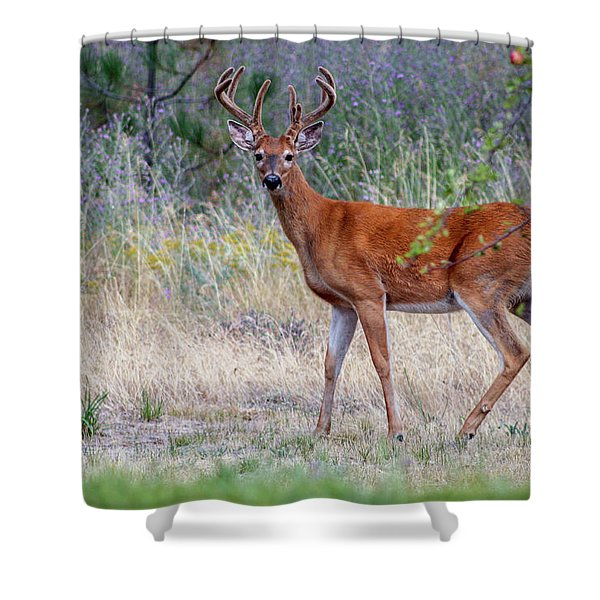 Shower Curtain featuring the photograph Red Bucks 1 by Antonio Romero