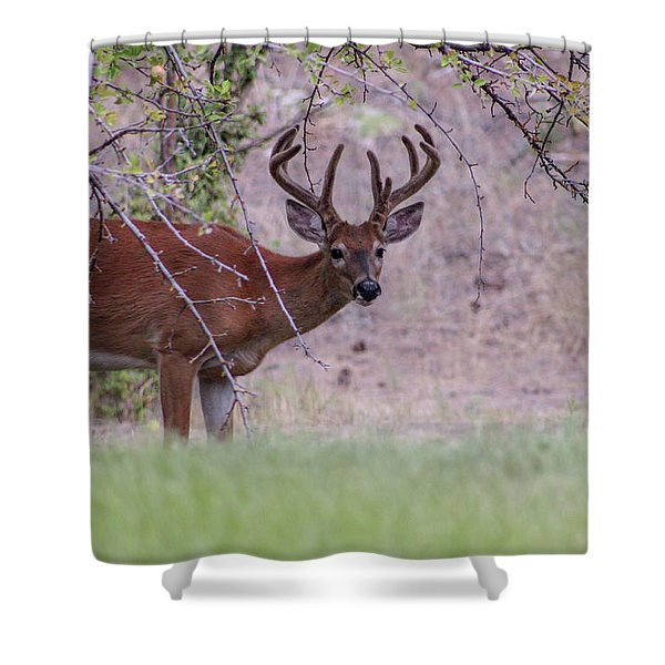 Shower Curtain featuring the photograph Red Bucks 2 by Antonio Romero