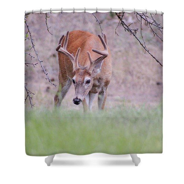 Red Bucks 6 Shower Curtain