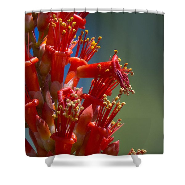 Red Cactus Flower 1 Shower Curtain