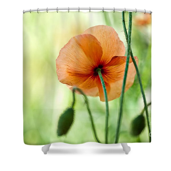 Red Corn Poppy Flowers 02 Shower Curtain