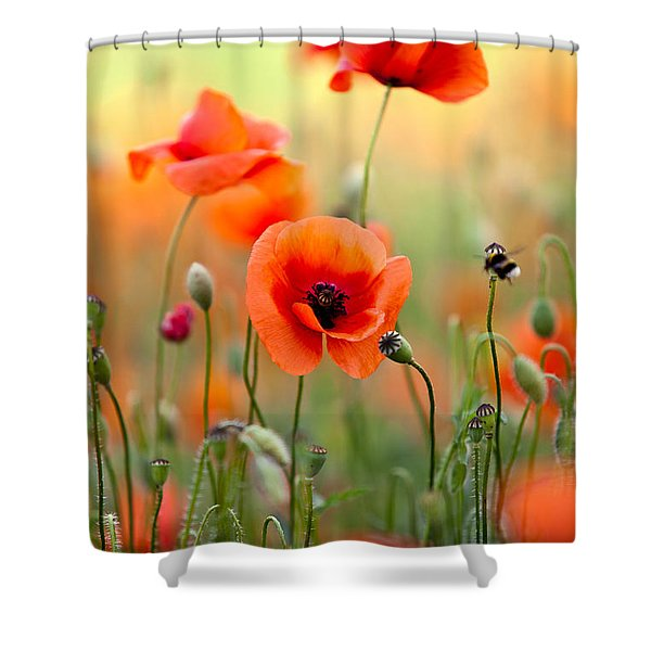 Red Corn Poppy Flowers 06 Shower Curtain
