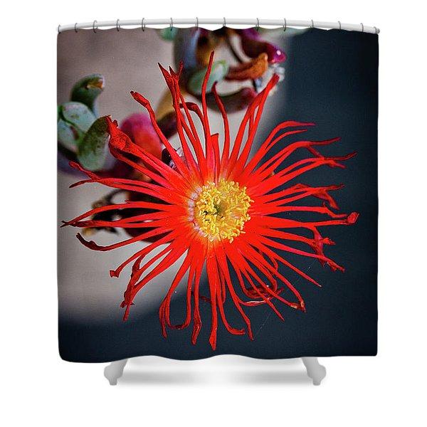 Red Crab Flower Shower Curtain