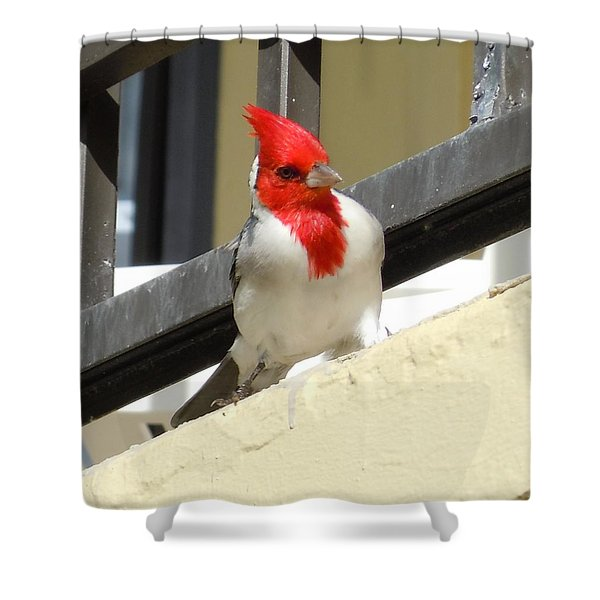 Red-crested Cardinal Posing On The Balcony Shower Curtain