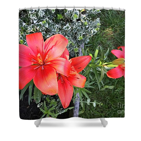 Red Day Lilies Shower Curtain
