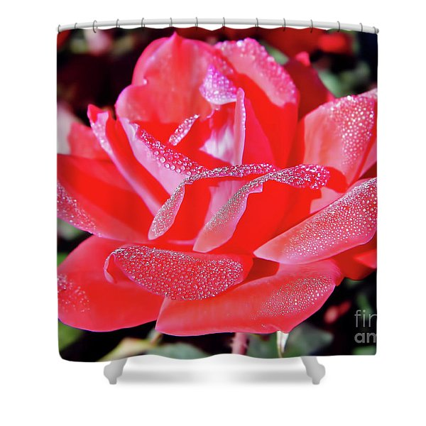 Red - Dew Covered  - Rose Shower Curtain