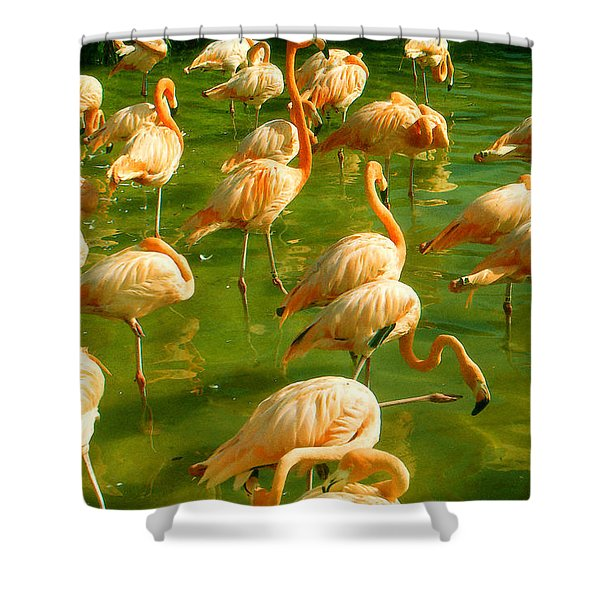 Red Florida Flamingos In Green Water Shower Curtain