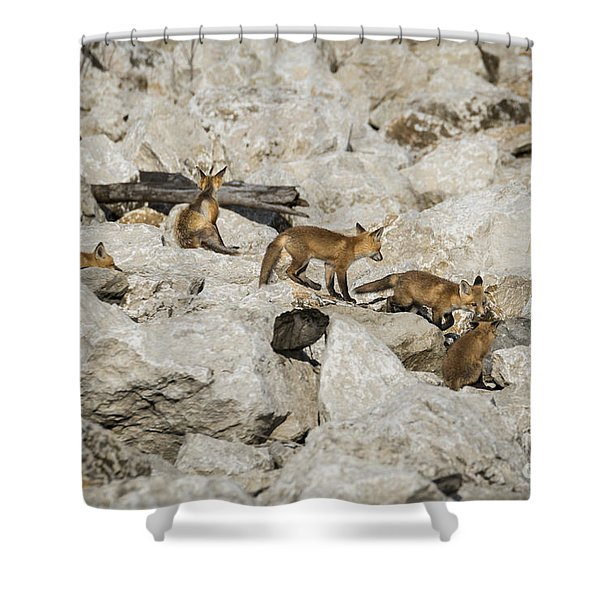 Shower Curtain featuring the photograph Red Fox Family by Andrea Silies