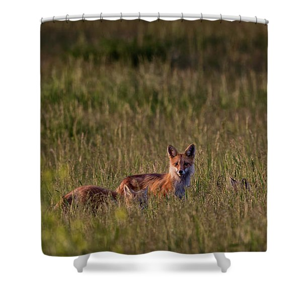 Red Fox Family Shower Curtain