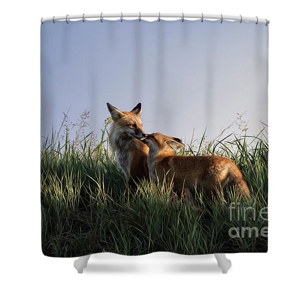 Red Fox Morning Shower Curtain