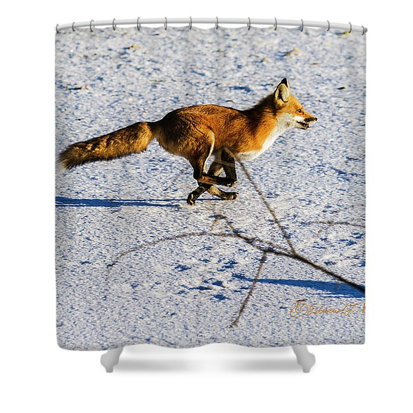 Red Fox On The Run Shower Curtain