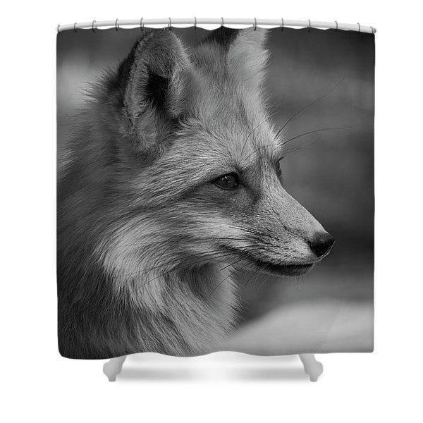 Red Fox Portrait In Black And White Shower Curtain