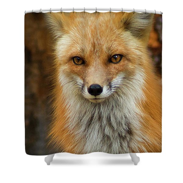 Shower Curtain featuring the photograph Red Fox Portrait by John De Bord