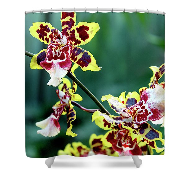 Striped Maroon And Yellow Orchid Shower Curtain