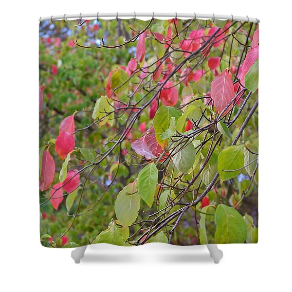 Red Green October Shower Curtain