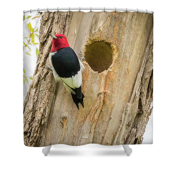 Red-headed Woodpecker At Home Shower Curtain