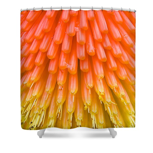 Red Hot Poker Flower Close Up Shower Curtain
