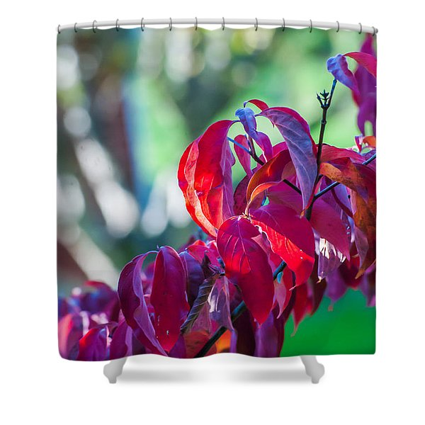 Red Leaves - 9592 Shower Curtain