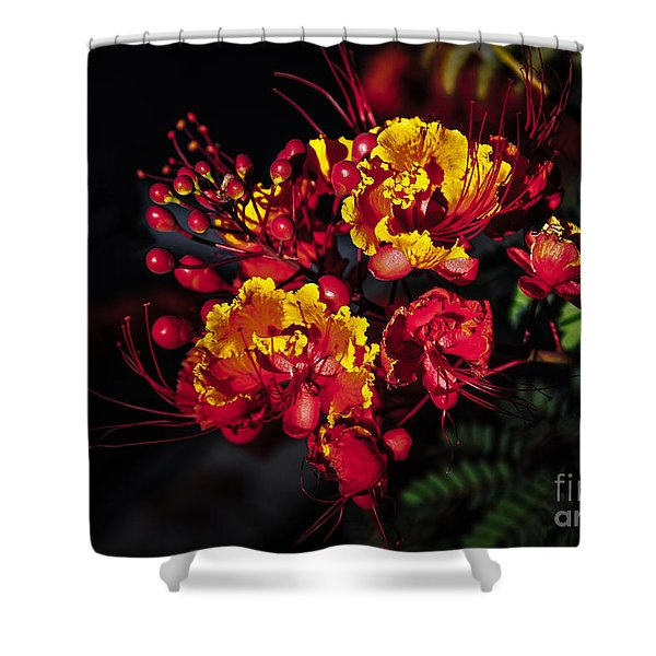 Red Mexican Bird Of Paradise Shower Curtain