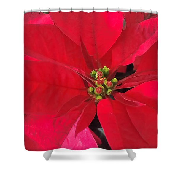 Red Poinsettia Shower Curtain