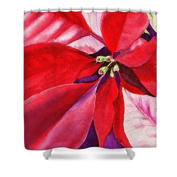 Red Poinsettia Plant Shower Curtain