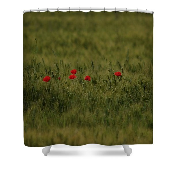 Red Poppies In Meadow Shower Curtain