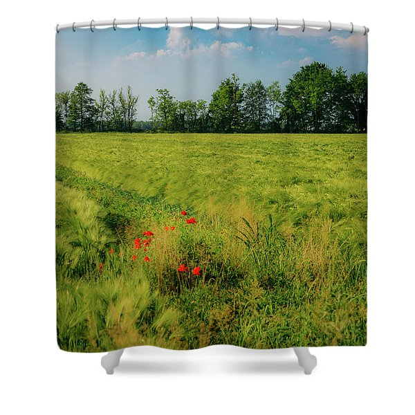 Red Poppies On A Green Wheat Field Shower Curtain