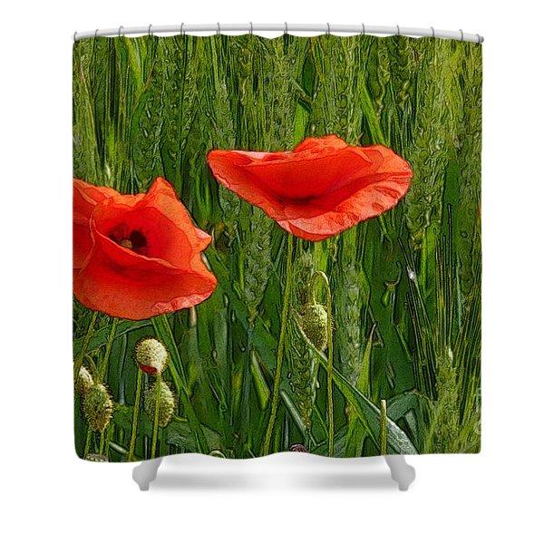 Red Poppy Flowers In Grassland 2 Shower Curtain